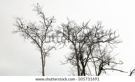 High altitude dead trees under grey sky