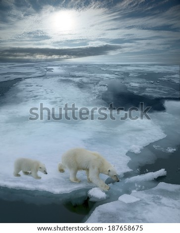 high angle of mother polar bear and cub walking on ice floe in arctic ocean north of svalbard norway, illustrated with arctic sun and sky - stock photo