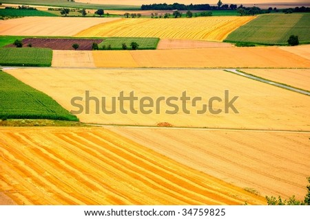 High-angle shot of cornfields before harvesting - stock photo