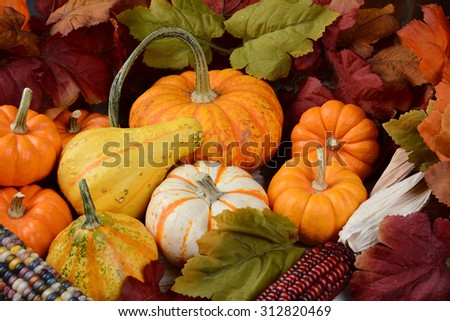 High angle view of a Fall still life  with assorted gourds and pumpkins, indian corn and leaves.