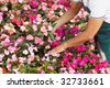 High angle view of florist arranging pink flowers pots - stock photo