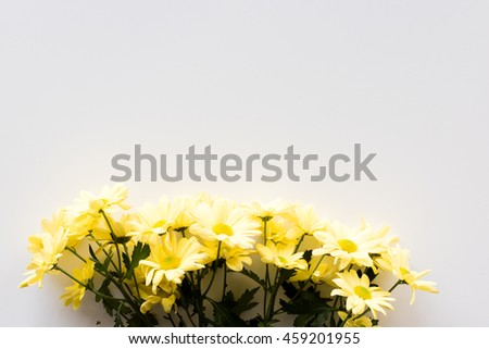 High angle view of yellow daisies arranged in a row on a white table