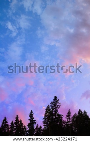 high blue and violet sky over the trees - stock photo