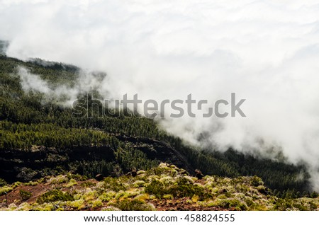 High Clouds over Pine Cone Trees Forest in Tenerife Island