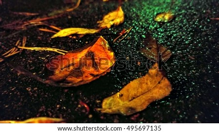 High contrast close up of bright autumn leaves and pine needles on wet black asphalt road in dark evening after rain