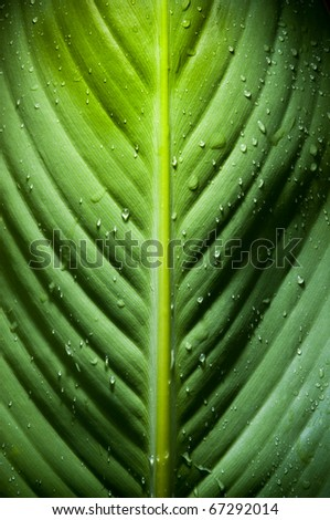 High contrast detail of large fresh leaf with water droplets - stock photo