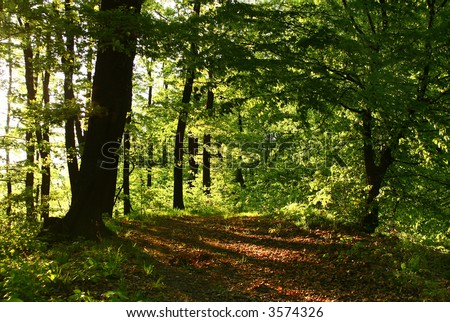 High contrast forest lights - summer