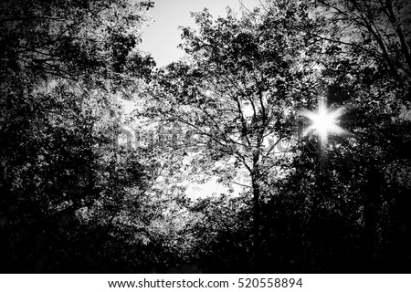 High contrast of the sun shining through the trees using filters to take away color