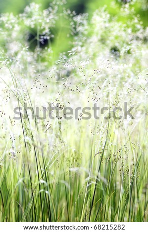 High grass flowering in the spring \ summer - stock photo