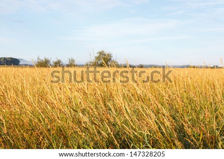 High grass i the meadow
