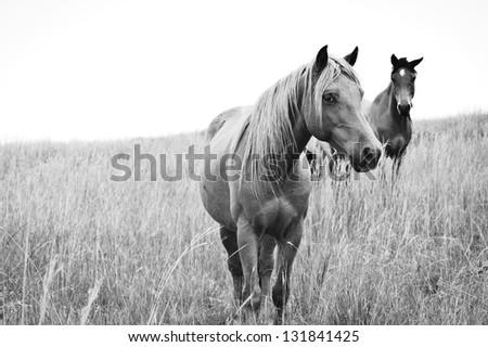 High Key Horses - stock photo