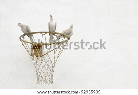 High key image of a group of three, white, collared doves perched amusingly around the hoop of a basketball net. - stock photo