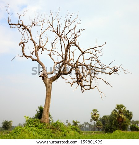 High latitude dead tree under blue sky  - stock photo