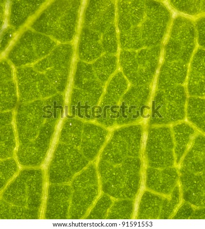High magnification of leaf tissue under microscope - stock photo