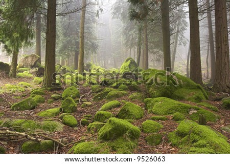 High mountain woods in a spring morning in the national park of Peneda Geres in the north of Portugal - stock photo