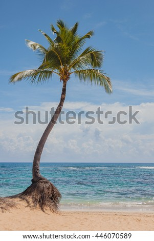 High palm tree on blue sky, ocean and sand background. Summer vacations on tropical island.