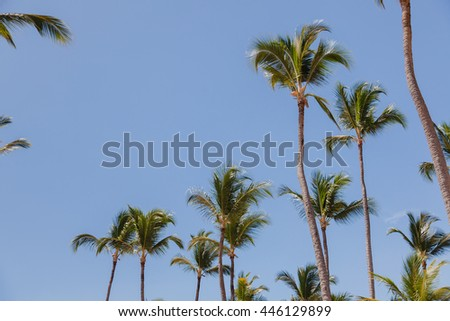 High palm trees on blue sky background. Summer vacations on tropical island.