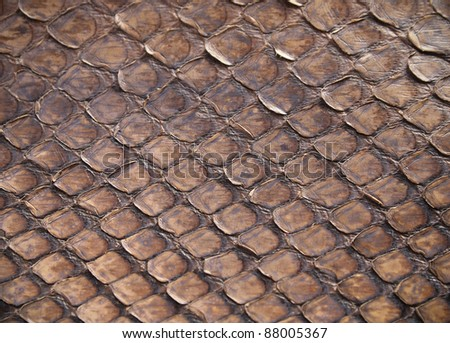 high quality brown snake skin background - stock photo