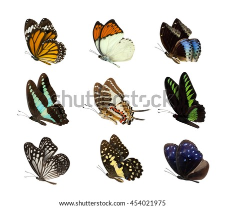 High Quality of nature butterfly Collection - Set of butterfly isolated on white  - stock photo