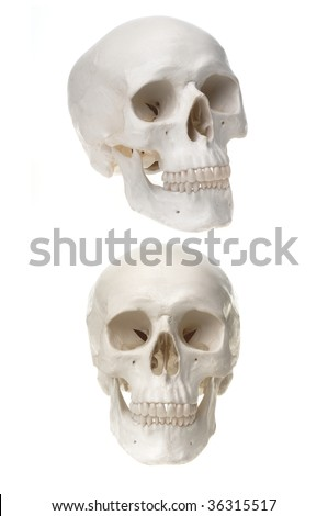 High res portrait of a human skull, different positions, isolated on white background