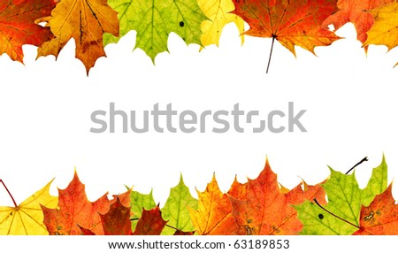High resolution colorful autumn maple leaves background - stock photo