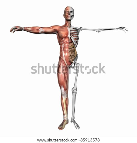 High resolution 3D illustration of a human skeleton. Isolated on white background - stock photo