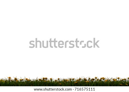 High resolution green,fresh and natural 3d grass field or lawn with dandelion flowers isolated on white background