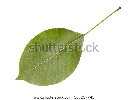 High Resolution green leaf isolated on white background