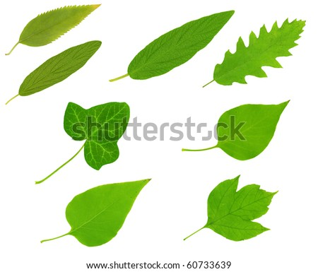 High resolution green leafs isolated on white background