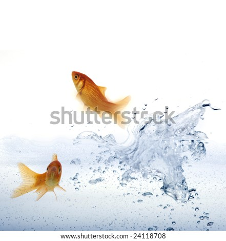 High resolution image of a goldfish leaping out of the water. - stock photo