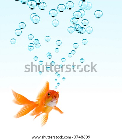 High resolution image of goldfish making bubbles. - stock photo