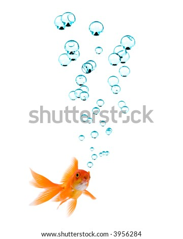 High resolution image of goldfish with bubbles. - stock photo