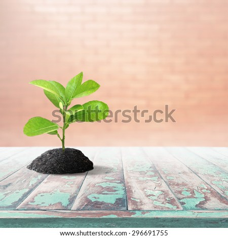 High resolution little green tree in black soil over vintage wood pane and blur brick wall background with flare lighting effect - stock photo