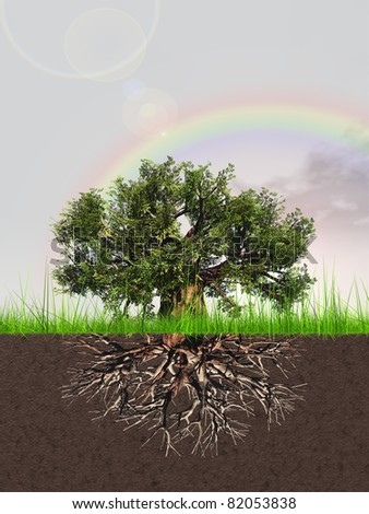 High resolution old baobab tree with roots in earth and a beautiful blue sky background with clouds and a rainbow - stock photo