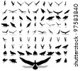 High resolution set group or collection of black eagle silhouette isolated on white background for birds,animal,wildlife,symbol,,hawk,fly,flight,emblem,wild,decoration,wings,power,conceptual or falcon - stock vector