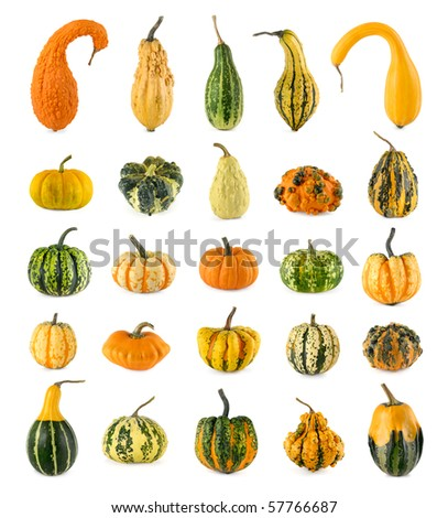 High resolution set of twenty-five diverse colorful pumpkins on white background - stock photo