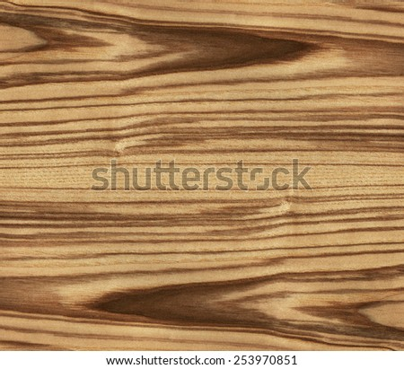 high resolution texture of ash tree - stock photo
