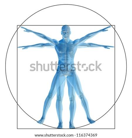 High resolution Vitruvian human or man as concept,metaphor or conceptual 3d anatomy body for biology,anatomical, Leonardo,proportion ,medicine,symbol,physiology,skeleton,health,humanity or morphology - stock photo