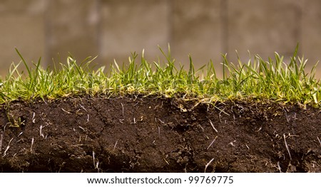 High shoes with green grass - stock photo