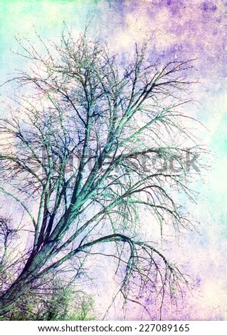 high tree - styled Picture  - stock photo