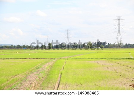 High voltage post on rice field in Thailand