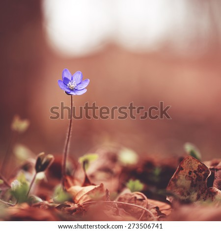 High wild blue flower in forest - stock photo