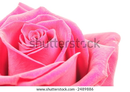 Highkey Valentines Rose this highkey foto shows a red rose over white background. - stock photo