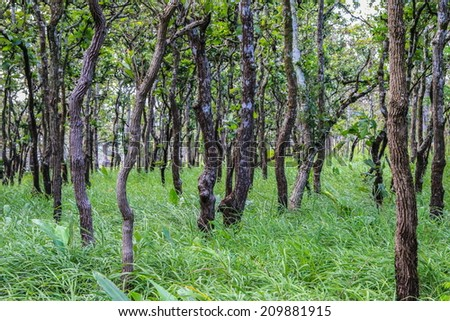 Highland tropical forest, Chaiyaphum Province, Thailand. - stock photo