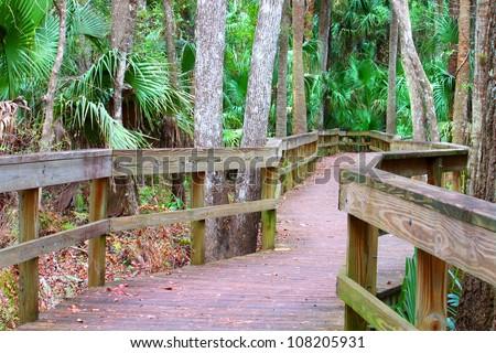 Highlands Hammock State Park in Florida - stock photo