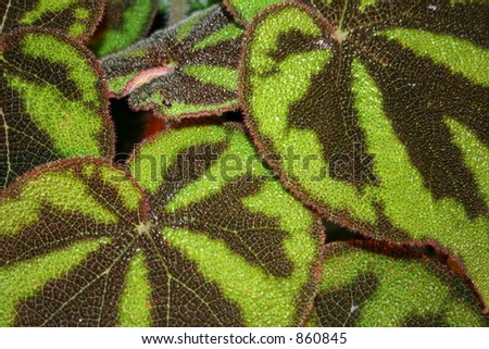 Highly textures Vibrant Green leaves. - stock photo