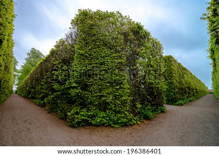Highly trimmed and manicured trees and shrubs along a garden walkway or path. - stock photo