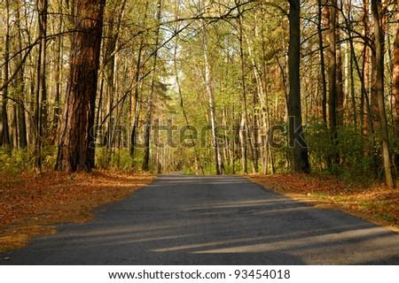 Highway in autumn wood - stock photo