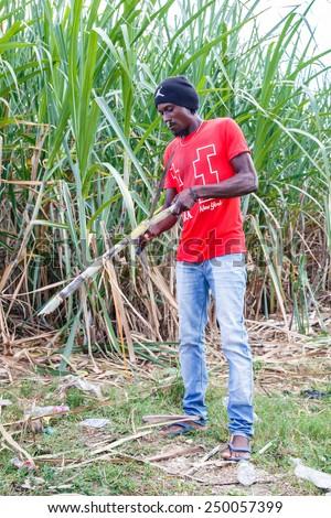 HIGUEY, DOMINICAN REPUBLIC - NOVEMBER 19, 2014: portrait of haitian man working on sugar cane plantation in Dominican Republic - stock photo