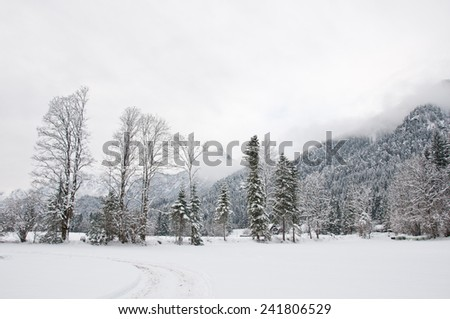 hike path through a winter landscape